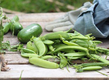 Zábavné pěstování hrášku pro děti