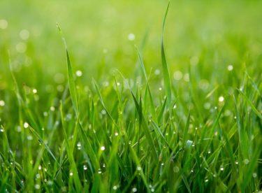 Okrasný trávník není věda! 4 tipy, jak na něj