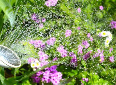 Květen v zahradě