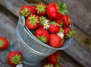 """Snadné pěstování jahod pro každého. Zahrádkáře i """"balkónáře"""""""