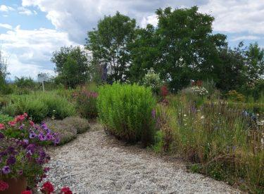 Chcete si založit svou vlastní přírodní zahradu? Poradíme jak!