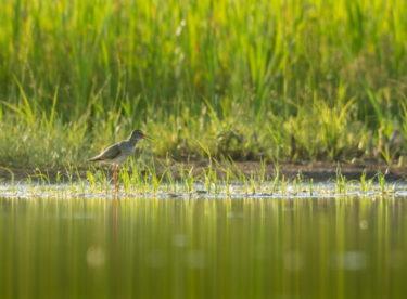 Na jižní Moravě vzniká mokřadní ráj. Stane se útočištěm pro 162 druhů ptáků
