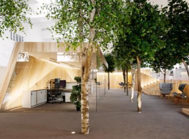 10 zelených kanceláří, ve kterých jsou lidé obklopeni stromy a rostlinami