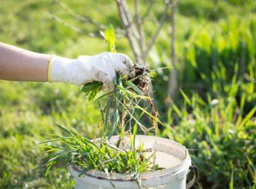 Jak se zbavit plevelu