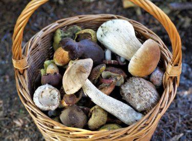 Kde rostou houby? Vydejte se na tato místa!