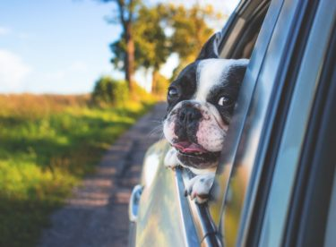 Cestujete se psem v autě? Možná ohrožujete svůj i jeho život