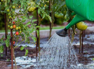 Dotace Dešťovka budou pokračovat v rámci Nové zelené úsporám