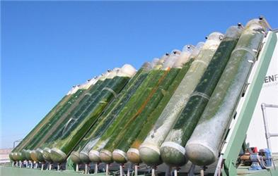 Řasy vyrábí biopalivo – 30x efektivněji než na polích