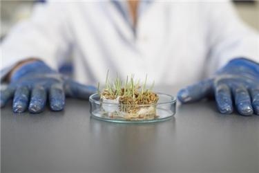 Důsledky pěstování geneticky modifikovaných potravin mohou být pozitivní inegativní