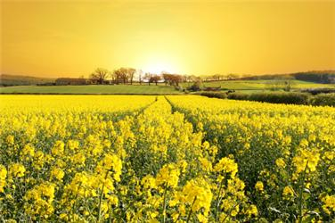 Biomasa má hrát vrozvoji obnovitelných zdrojů zásadní roli