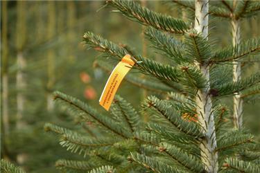 Štítek na stromku prozradí, vjaké zemi byl vypěstován