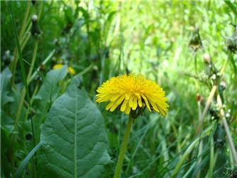 V lučním porostu postupně vykvétají nejrůznější druhy rostlin