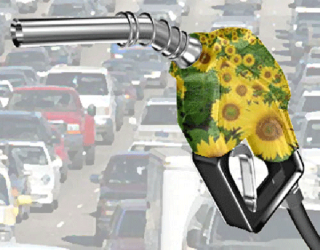 Za benzín anaftu si vroce 2010 připlatíme. Mohou za to biopaliva?