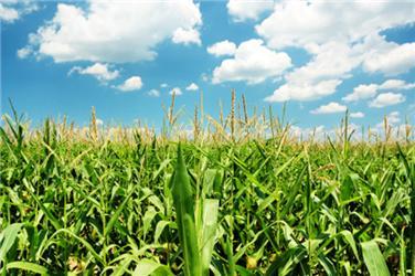 Jak dopadnou biopaliva po volbách? Politickým stranám se je moc podporovat nechce