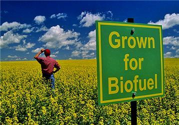 Pěstování rostlin pro výrobu biopaliv vyvolává mnoho emocí. Podle některých stojí biopaliva za potravinovou krizí vchudých státech světa