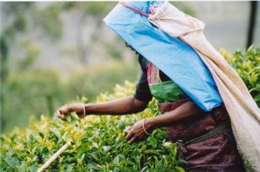 Fairtrade - Kolumbie