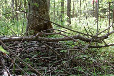 Biomasou jsou iobyčejné piliny, odřezky avětve