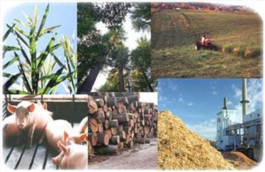 Biomasa může mít různou podobu. Zjednodušeně řečeno se jedná ohmotu všech pozemských organismů.